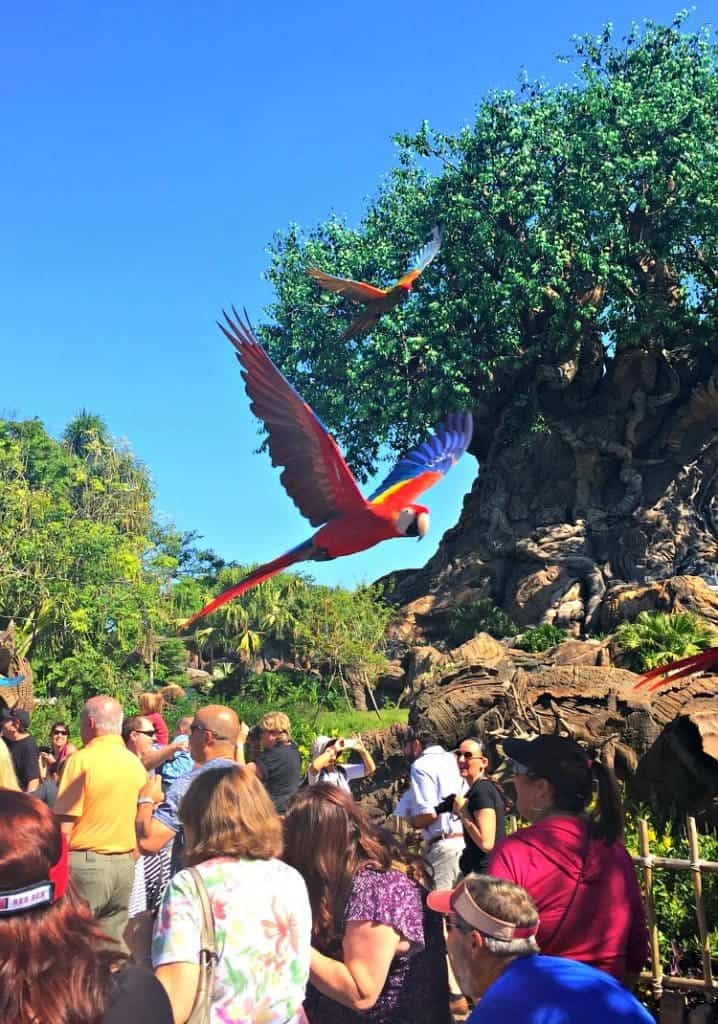 parrots-animal-kingdom
